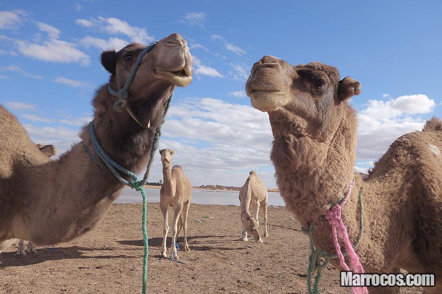 Tour de 4 Dias – Sahara Express