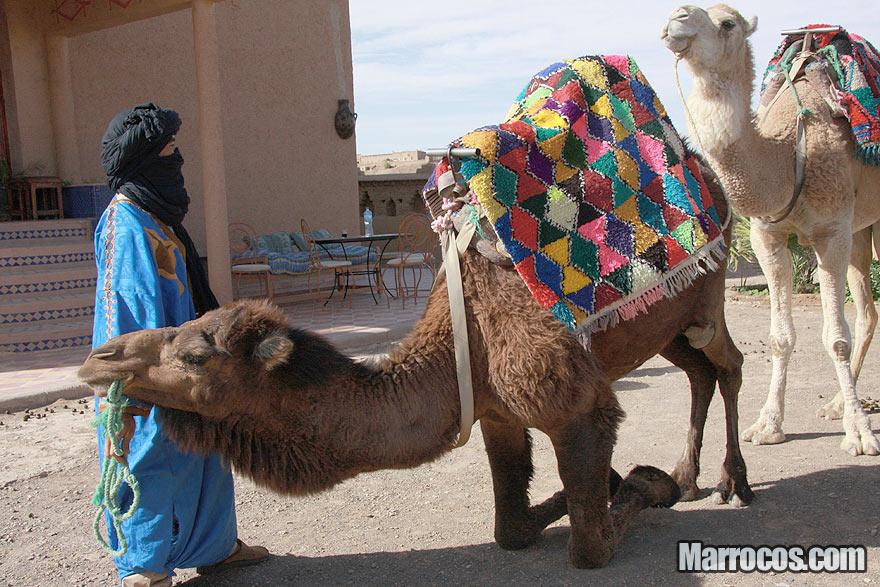 Camelos nas dunas do deserto de Marrocos