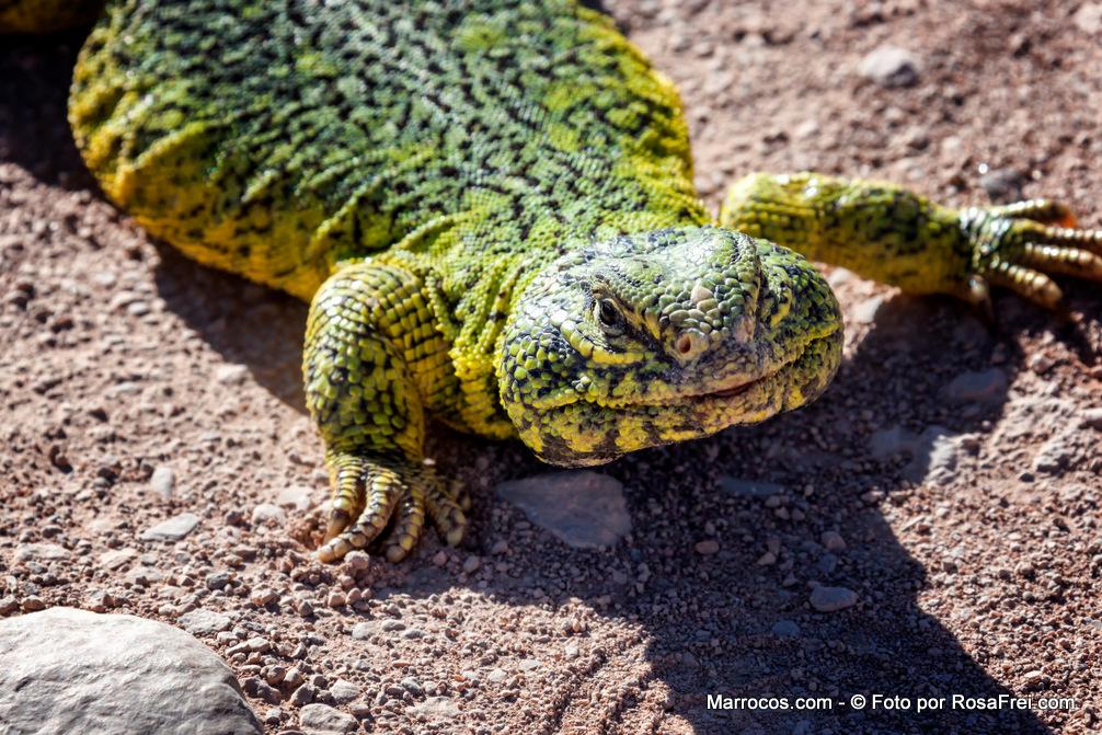 Fotos de Marrocos Animais Marrocos 1 Fotografias de Marrocos