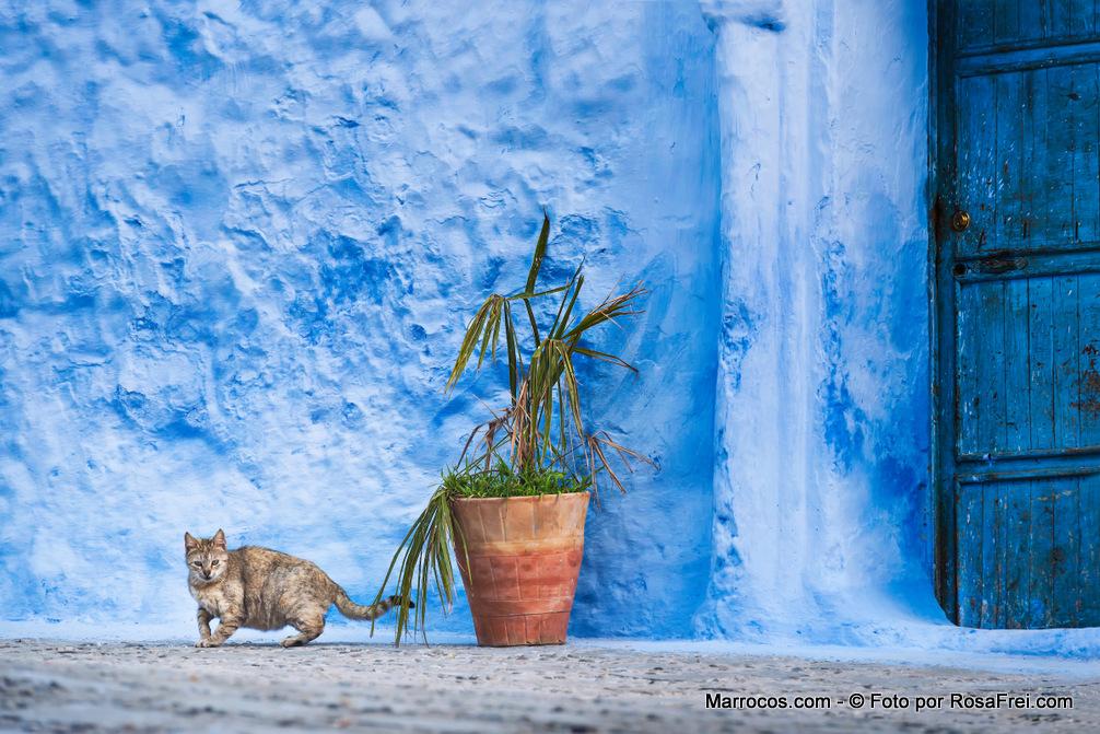 Fotos de Marrocos Chefchaouen Marrocos 5 Fotografias de Marrocos