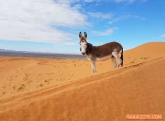 DESERTO SAHARA MARROCOS