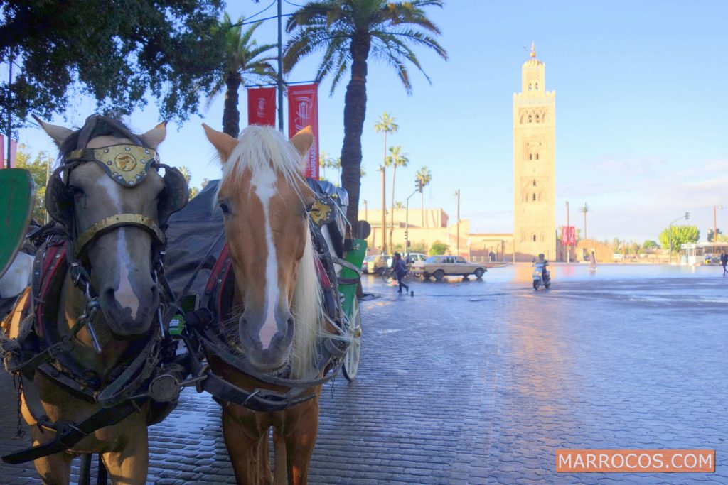 4 dias » Marrakech City Break