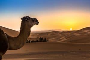 Melhores destinos para visitar Marrocos