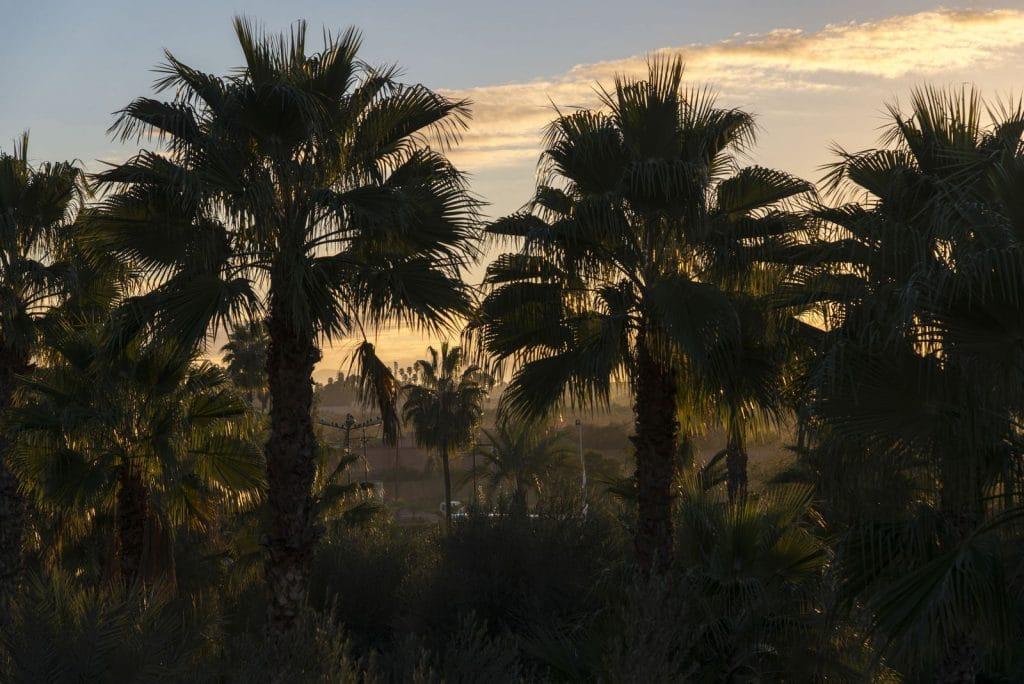 Palmeiral em Marrakech
