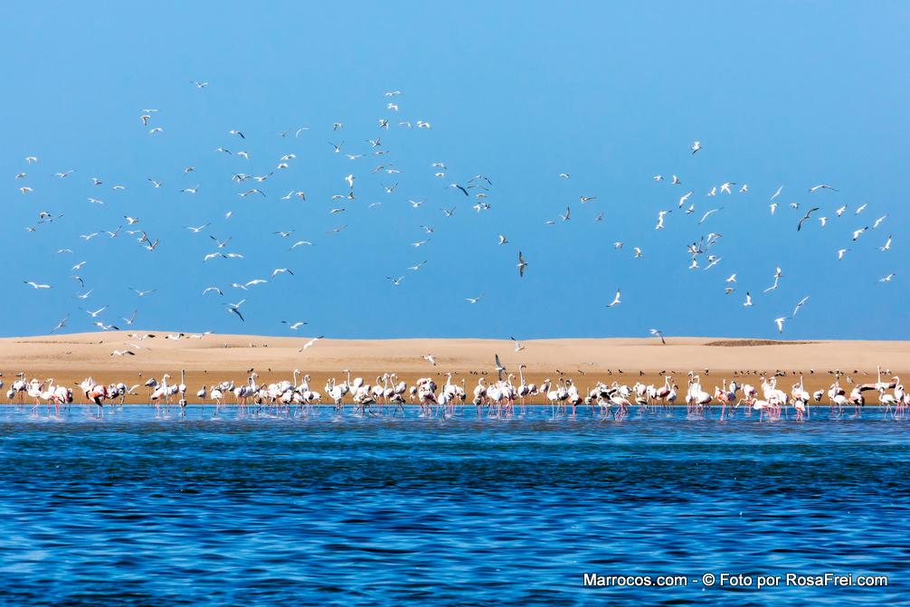Flamingos na Lagoa de Khenifiss na Costa Atlântica marroquina