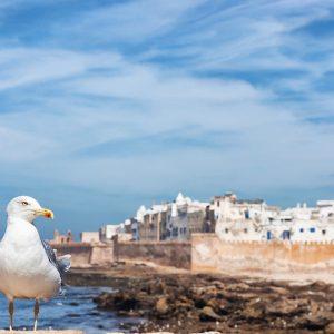 Tour Grande Volta Marroquina -12 dias em Marrocos