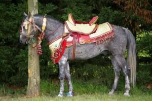 Cavalo marroquino