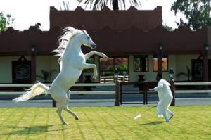 Cavalos de Marrocos