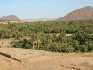 Deserto de Figuig em Marrocos