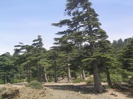 Parque Nacional de Ifrane Marrocos