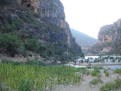 Cultivo de canabis no Riff em Marrocos